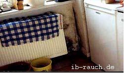 die ursachen f r ein feuchtes mauerwerk und beispiele. Black Bedroom Furniture Sets. Home Design Ideas