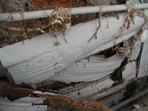 Hausschwamm hinter Holzverkleidung